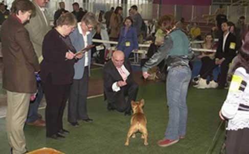 ГОСТ Р 554532013 Корма для непродуктивных животных Общие
